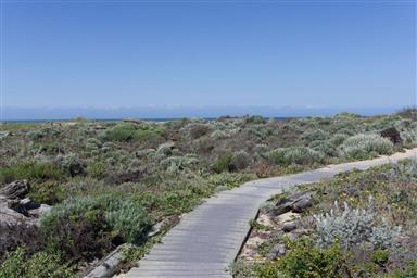 236 Monterey Dunes Way Photo #28