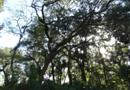339 Magnolia Pl, Debary, FL 32713