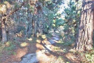 1047 Lost Barranca Road Photo #3