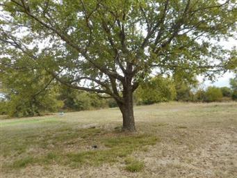 10922 Texas Highway 19 N Photo #19