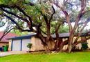 8706 Timberstone Street, San Antonio, TX 78250