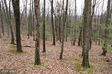 21461 Buck Trail Photo #17