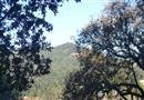 77 Hillside Drive, Fairfax, CA 94930