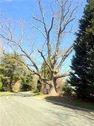 5922 Stonehedge Drive Photo #72