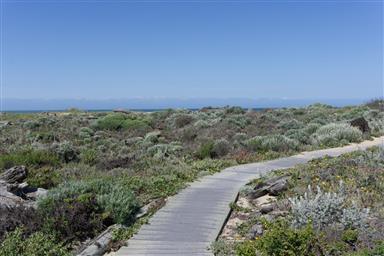 236 Monterey Dunes Way Photo #29