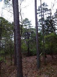 605 Greenbriar Trail Photo #21