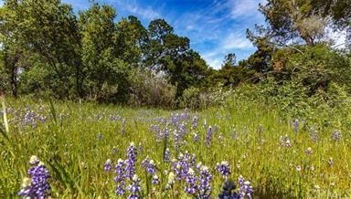 3298 Usona Ridge Road Photo #50