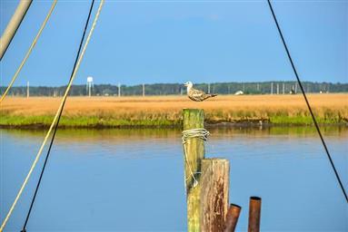 8407 Fishing Island Road Photo #38