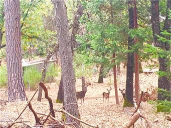 10764 Rosa Trail Photo #2