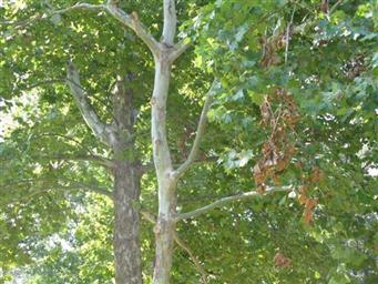 15856 Toledo Lane Photo #30