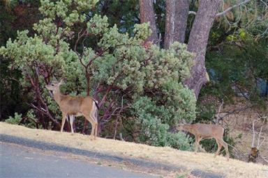 6334 Woodman Drive Photo #37