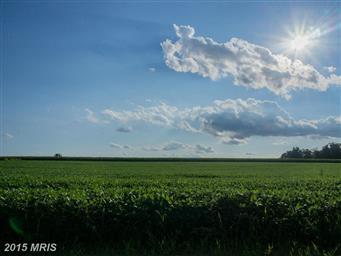 500 Country Tea Lane Photo #20
