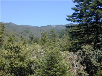 37751 Palo Colorado Road Photo #3