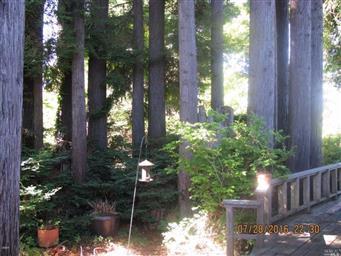 144 Woodland Drive Photo #29