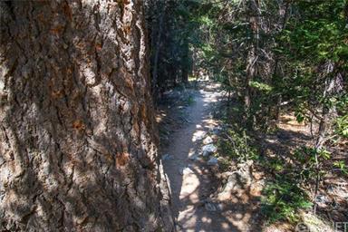 1200 Woodland Dr Photo #8