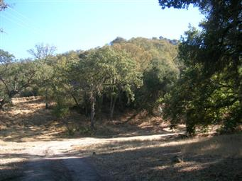20500 Cachagua Road Photo #8