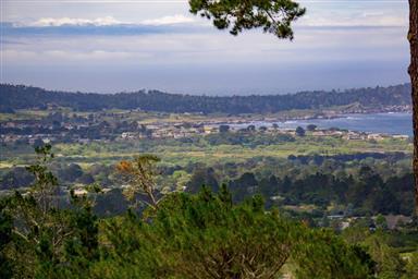 25140 Pine Hills Drive Photo #23