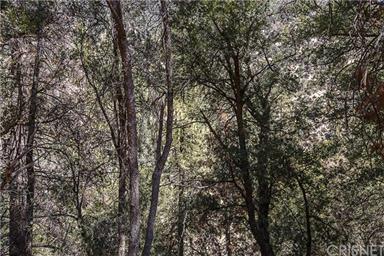 2505 Arbor Drive Photo #52