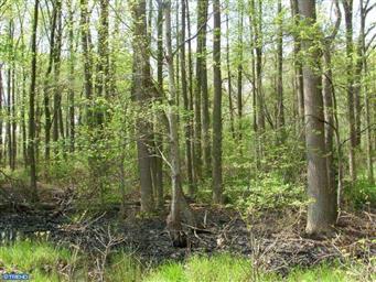 250 Blackbird Forest Road Photo #14