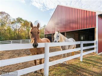 11173 Quarter Horse Lane Photo #29