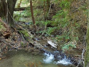 4750 Mill Creek Road Photo #26