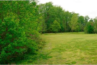 263 Lone Tree Drive Photo #23
