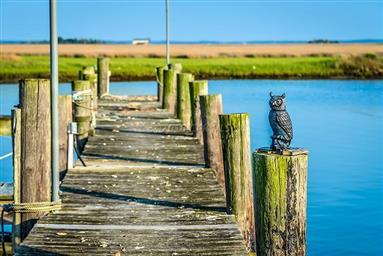 8407 Fishing Island Road Photo #40