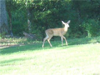 289 Meadow Landing Lane Photo #17