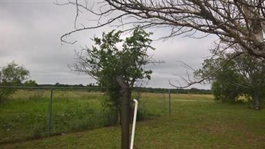3801 County Road 271 Photo #4