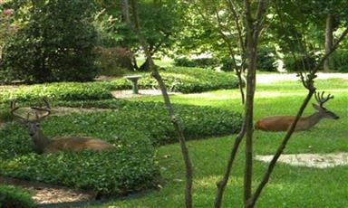 114 Weeping Willow Cove Photo #33