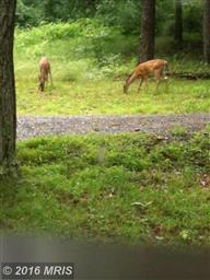 590 Whispering Pines Way #WAY Photo #23