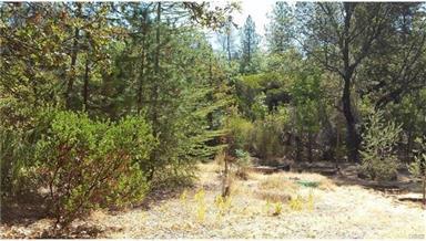 14938 Spruce Grove Road Photo #45