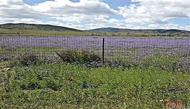 13898 Diamond Springs Road Photo #6