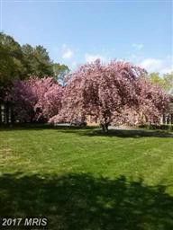 6649 Peach Blossom Point Photo #9