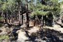 33 Oak DR, Munds Park, AZ 86017