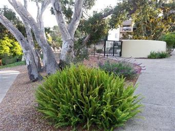 1109 Golden Oaks Lane #1109 Photo #13