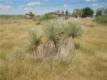 15290 Cactus Flower Photo #17