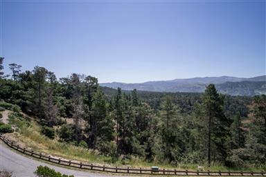 25140 Pine Hills Drive Photo #25