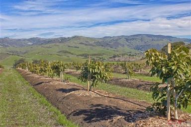 3755 Santa Rosa Creek Rd Photo #6