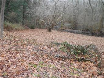 1817 Pine Way Photo #33