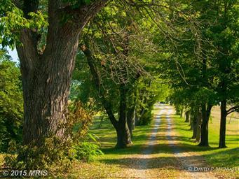 1558 Grade Road Photo #6