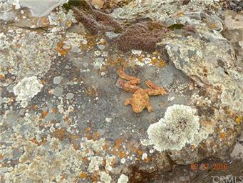 5104 Miocene Circle Photo #39