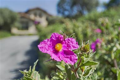 25663 Montebella Drive Photo #3