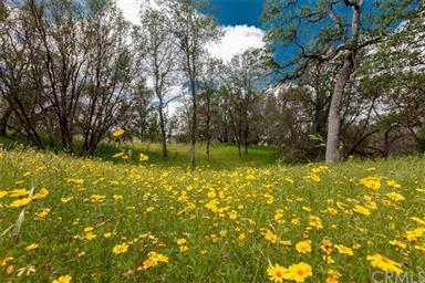 3979 Oak Grove Road Photo #2