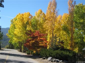 1717 Woodland Drive Photo #30
