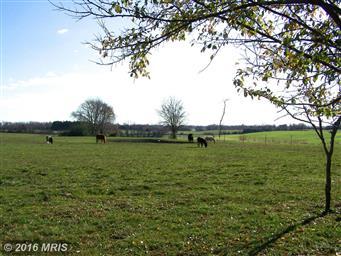 13744 Still Pond Rd Photo #5