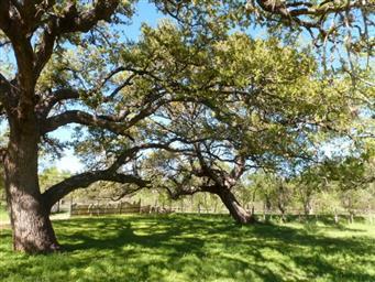 709 Loma Linda Photo #12