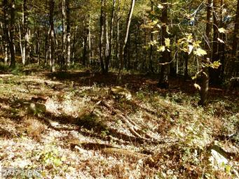 489 Wild Turkey Ridge Photo #9