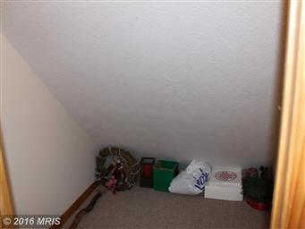 17003 Deep Forest Drive Photo #22