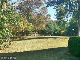 116 Mimosa Drive Photo #7